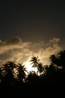 PALMERAS DE LITTLE CORN ISLAND