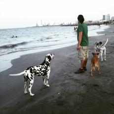 EL SUEÑO DE TENER TRES PERROS EN LA PLAYA